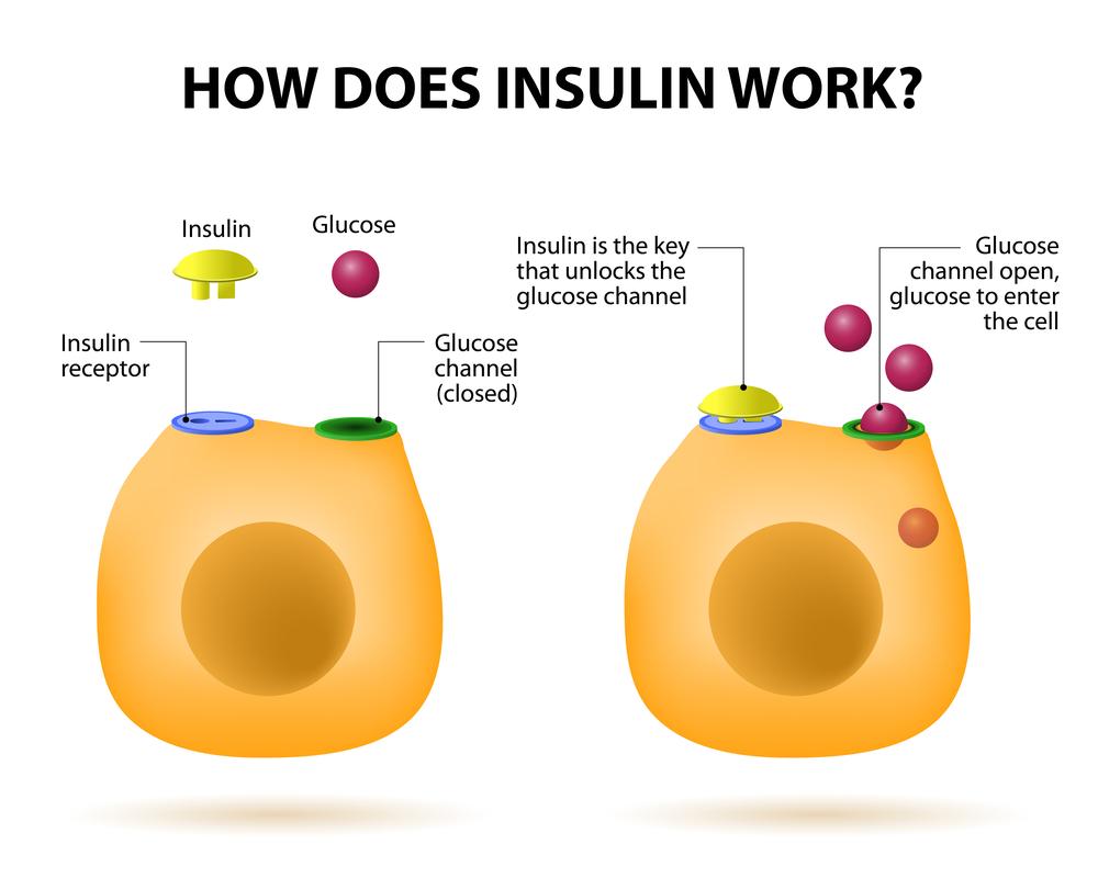 insulina proteina eliberata de pancreas